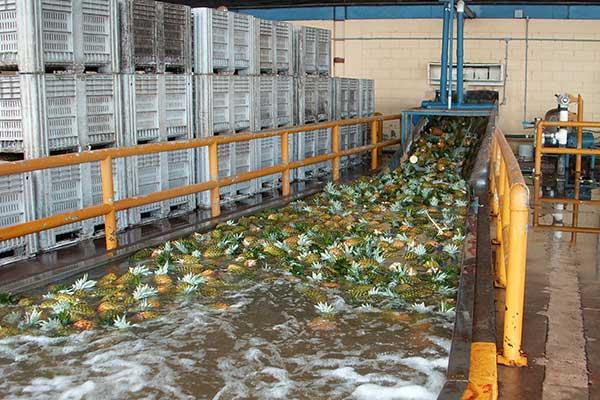 Industria del sector Alimentación