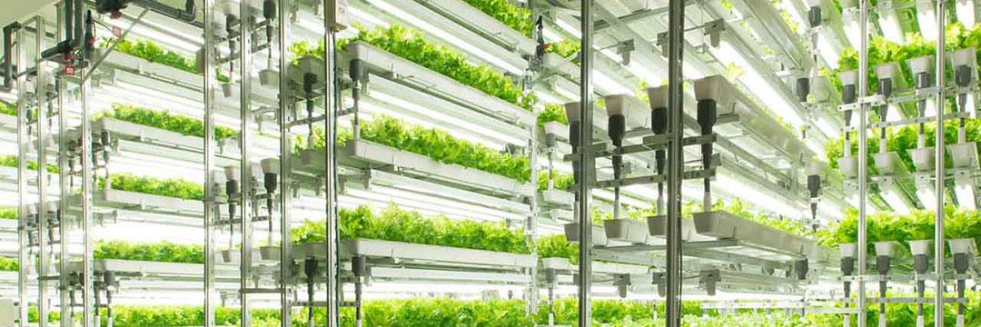 Agricultura avanzada